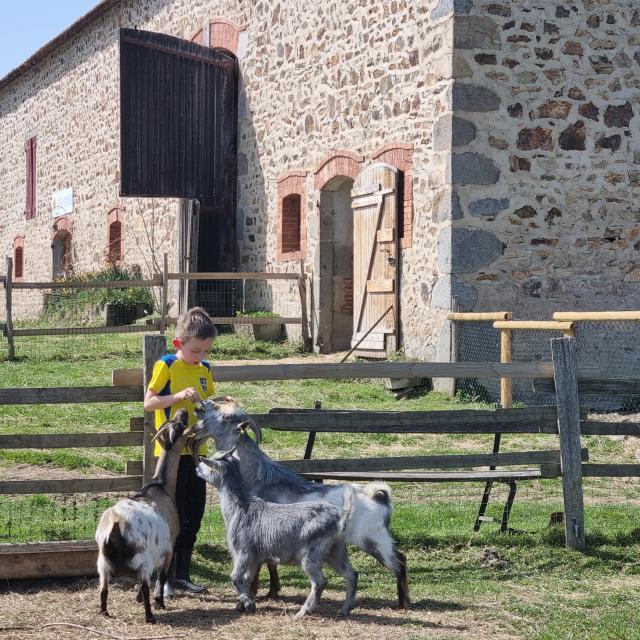 Ferme Des Clautres 1042021 (4)