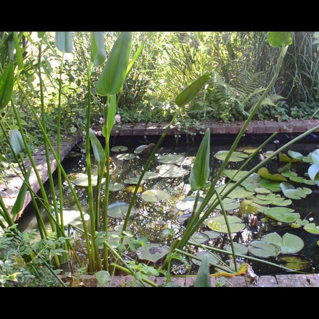 Jardin Les Gargalhous14