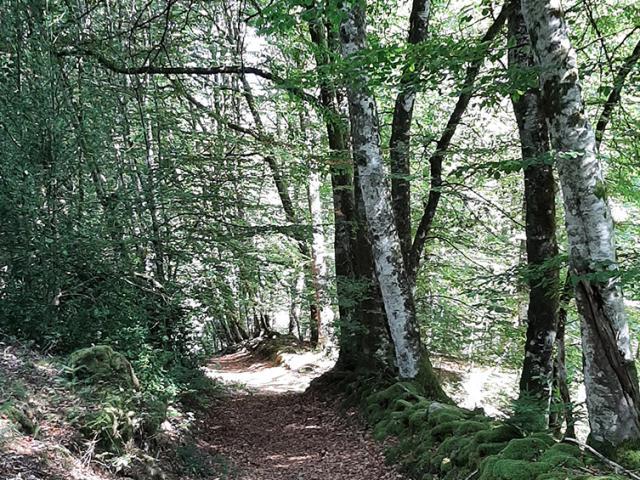 Randonnée Millevaches Vallée De La Chandouille Gentioux Forêt 3
