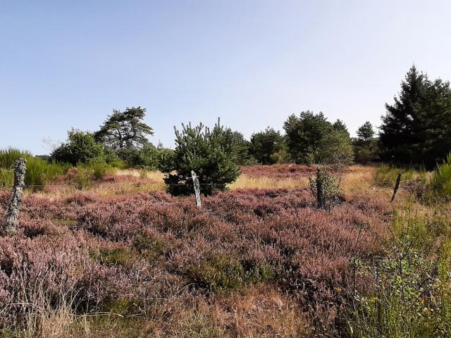 Randonnée Millevaches Vallée De La Chandouille Gentioux Forêt Bruyère 2