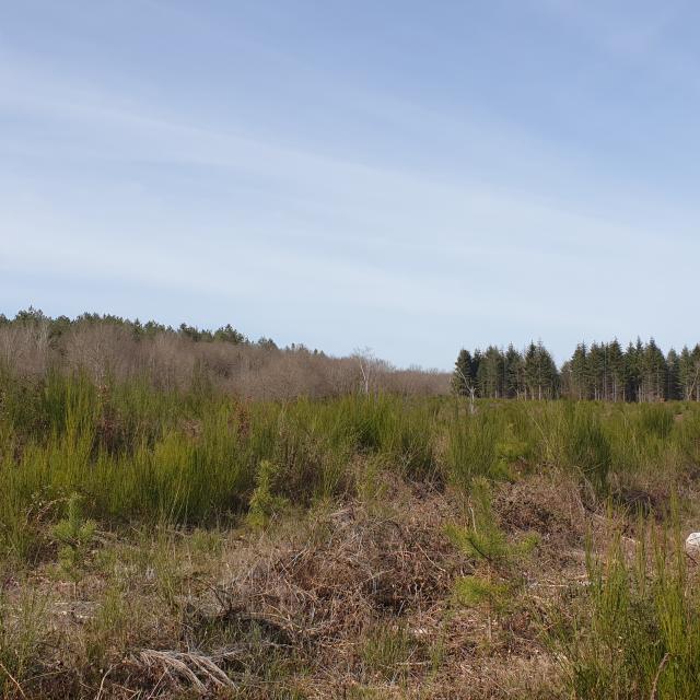 9-bois-de-lassoux-paysage.jpg