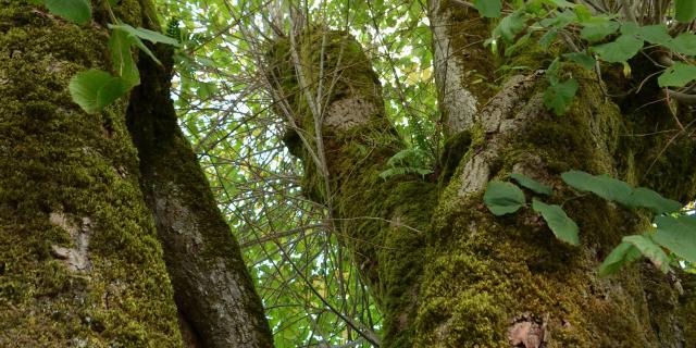 La force des arbres