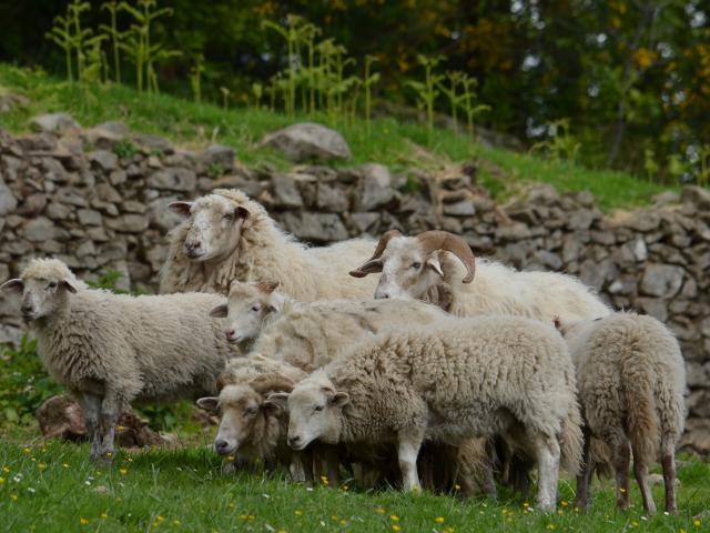 A la ferme du Mondoueix