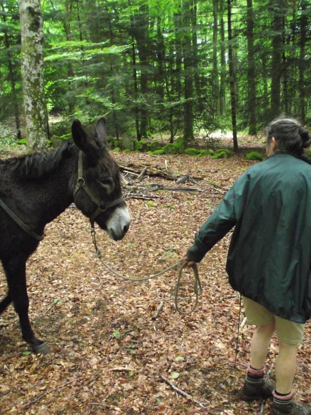 Rando avec âne