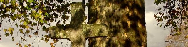 Platane de Moutier d'Ahun
