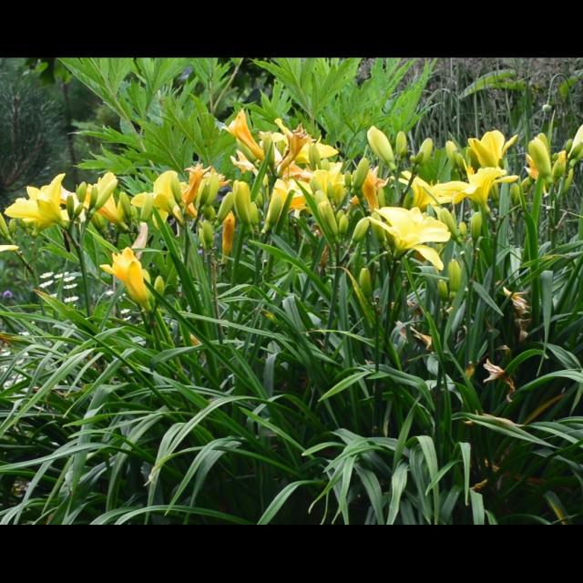 Jardin De La Sagne 4