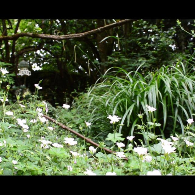 Jardin Clos Du Prefons1