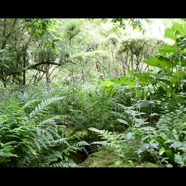 Jardin Clos Du Prefons6