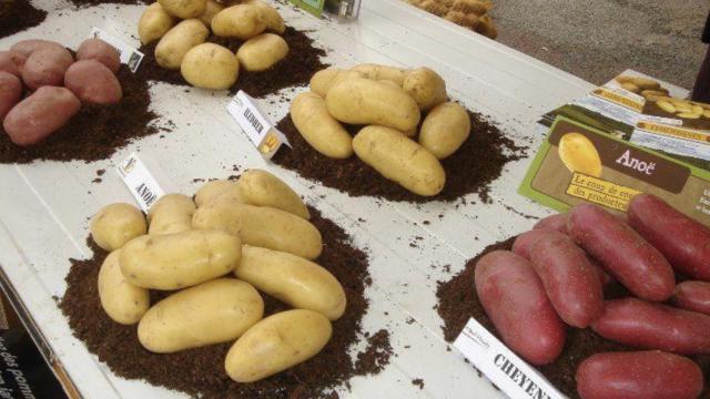 Fete de la patate - Jarnages