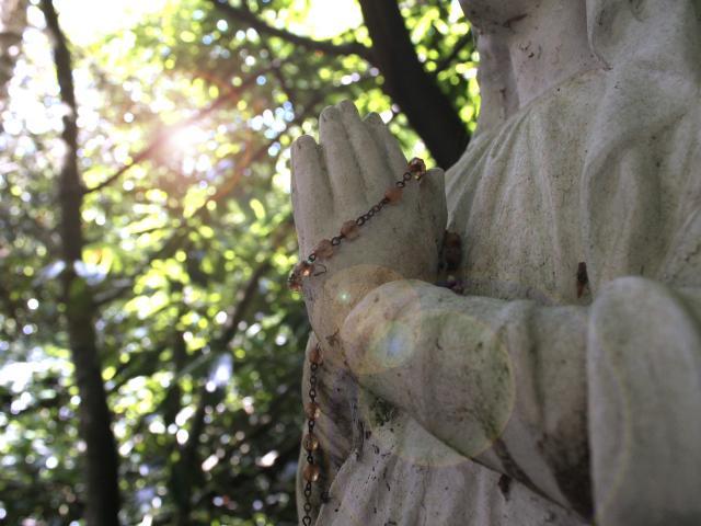Sainte églantine Bois De La Fôt