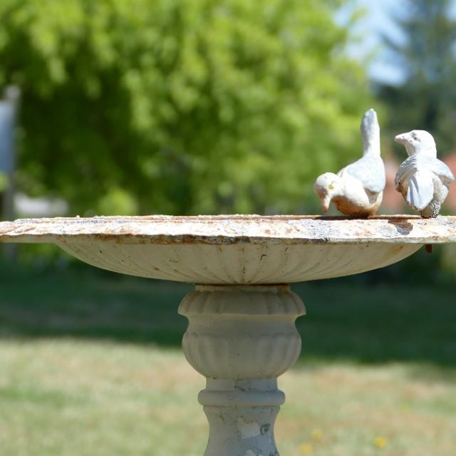 image-4-oiseaux-merinchal.jpg
