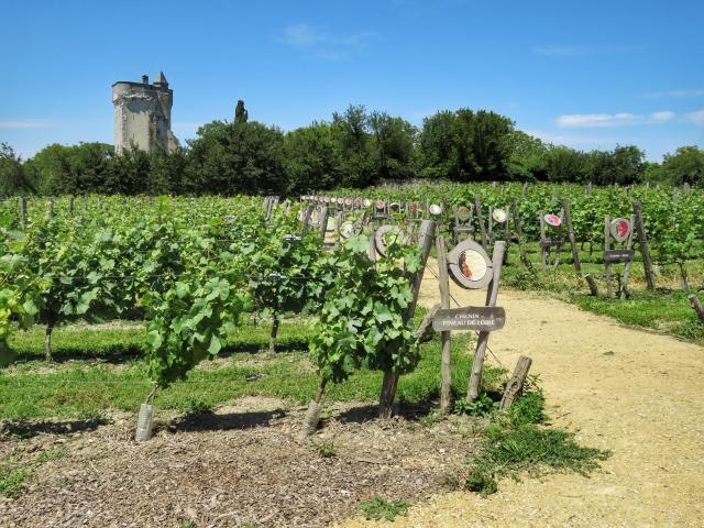 La collection de vignes des Treilles de la Reine Blanche