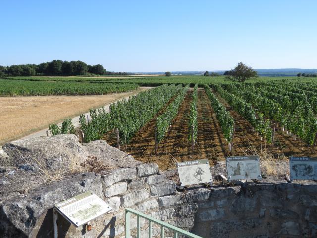 Vue Du Vignoble Depuis L'ancien Moulin à Vent De Pouant
