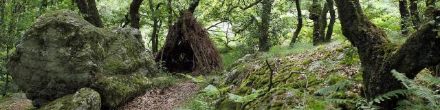 Forêt de Multonne