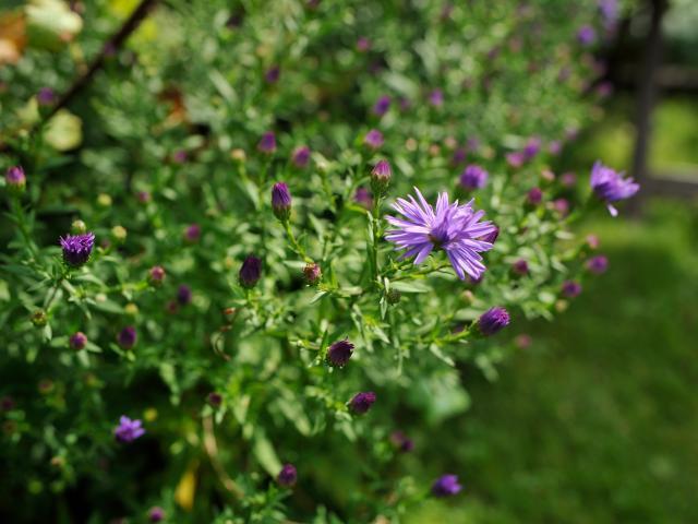 Gite A L Ombre Des Poiriers Saint Denis Du Maine - Fleur