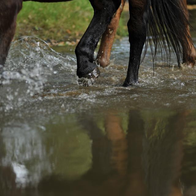 Randonnée à cheval - Ferme du Chemin à Madré