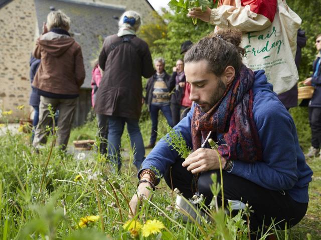 A la rencontre des plantes - cueillette de fleures comestibles