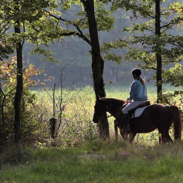 Cheval en forêt Mayenne
