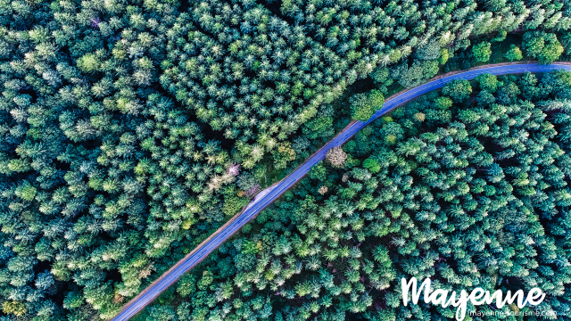 Forêt du Mont des Avaloirs