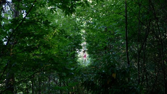 Parcours Accrobranche Au Bois A Force Force Cp Pascal Beltrami Mayenne Tourisme L Orbiere Domaine De Loisirs Hebergements Et Receptions 1920px(9)