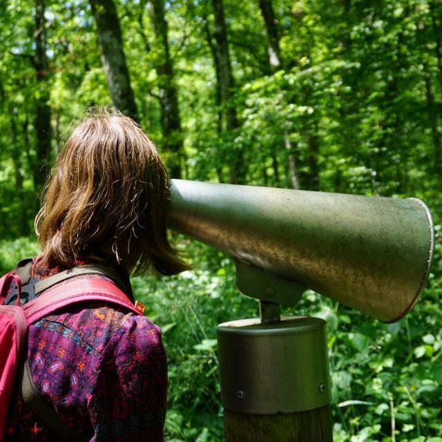 Ecoutons La Forêt Sentier De Malaumont