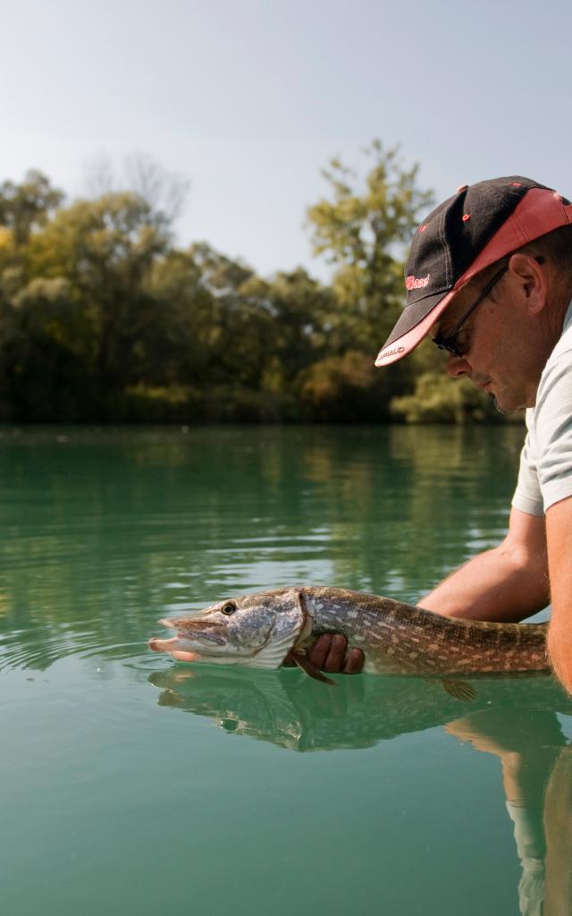 Pêcheur avec brochet sur la rivière Sarthe