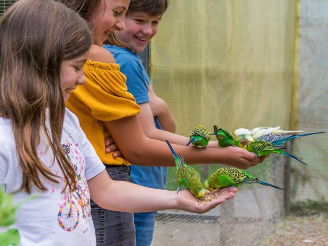 Enclos des Perruches de Spaycific'zoo venant picorer les graines dans les mains des enfants
