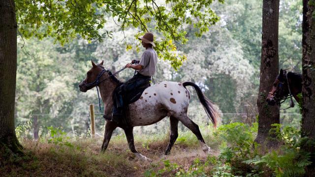 randonnees-equestres-web.jpg