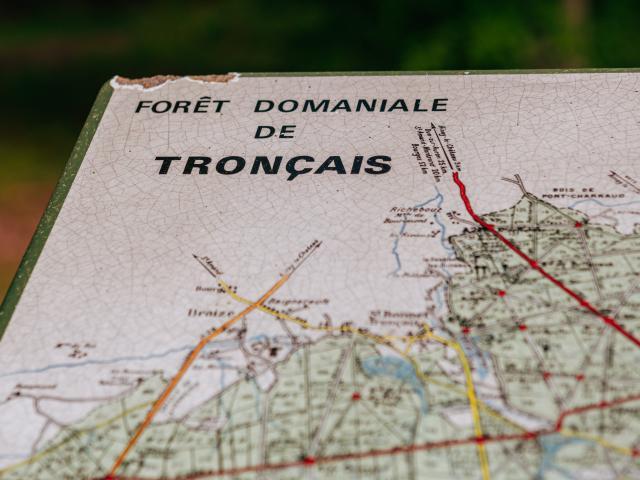 foret-de-troncais-16