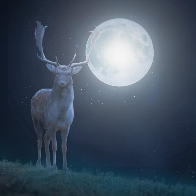 Deer 5827428 1920