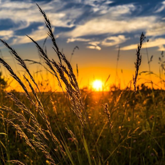 Wheat 2391348 1920