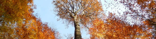 Chêne dans la forêt de Bercé - credit Yves Gauchet