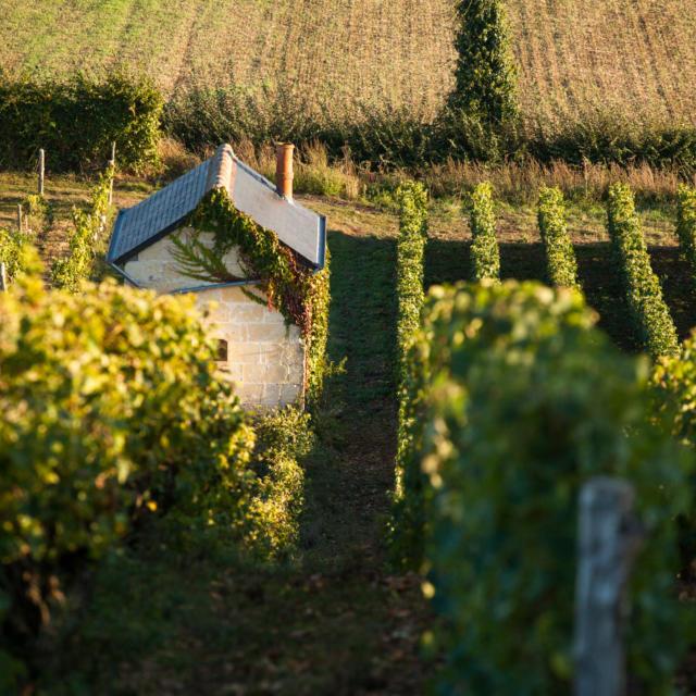 Vignes en Vallée du Loir