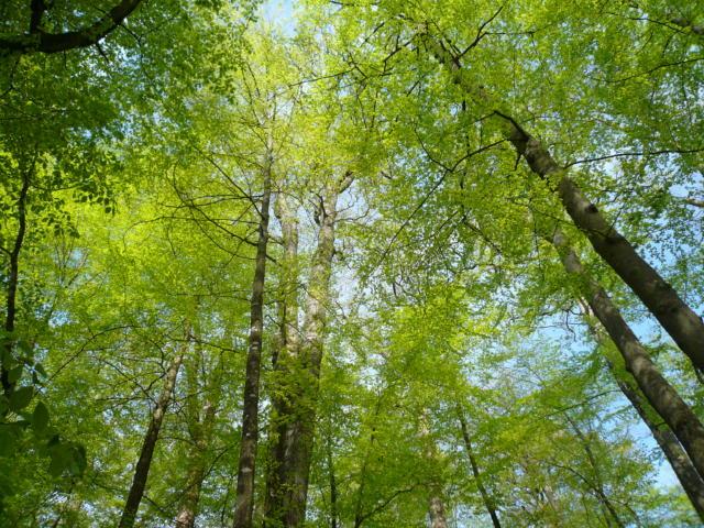 Vallée du Loir - Forêt de Bercé