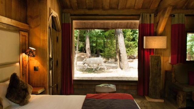Lodges Zoo La Fleche (1)