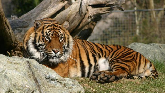 Zoo De La Fleche (1)
