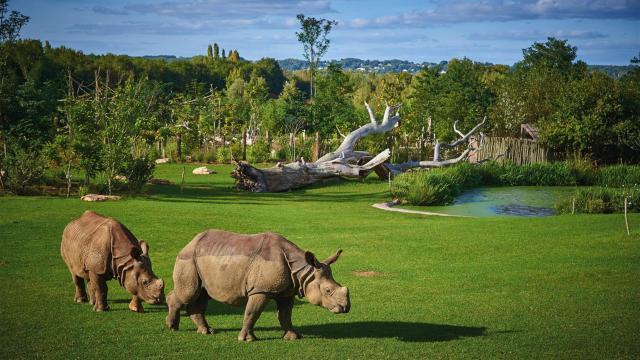 Zoo De La Fleche (2)