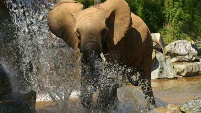 Zoo De La Fleche (4)
