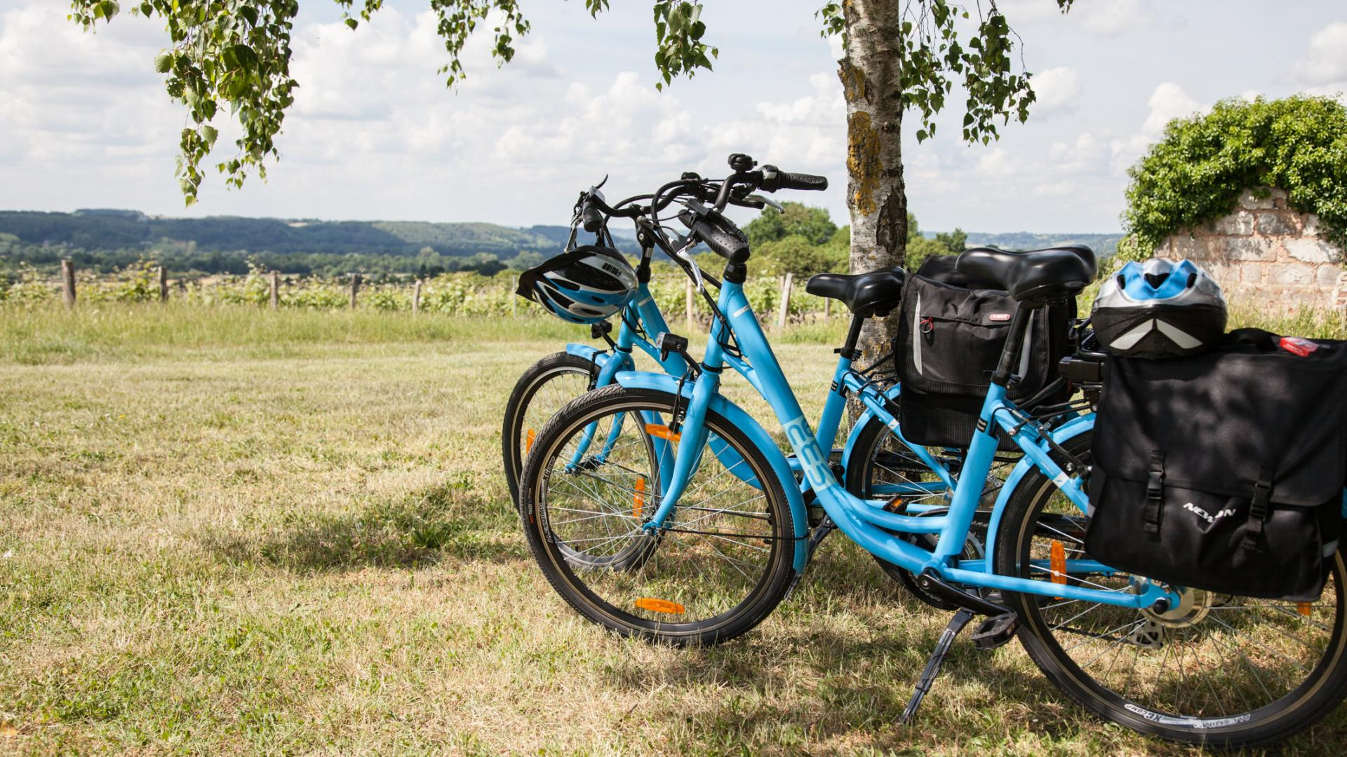 Vallée du Loir à vélo vignoble
