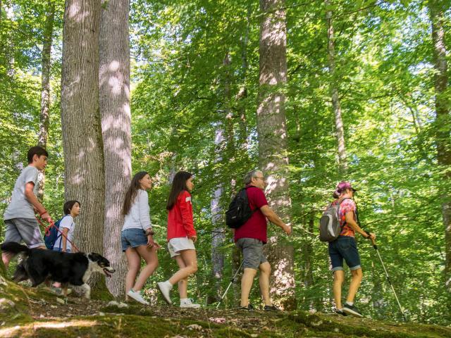 Randonnée Forêt de Bercé - Stevan Lira