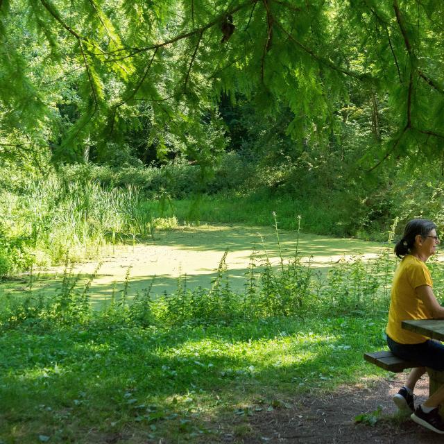 Pause randonneurs forêt bercé - Stevan Lira