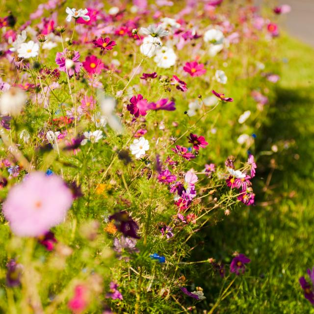 Fleurs 2011 ©stevan Lira (107)