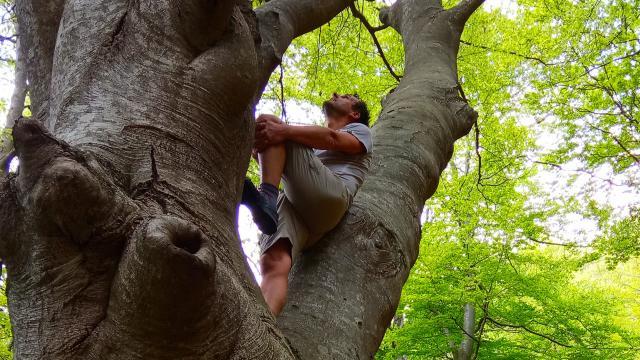 Bain de forêt sylvotourisme
