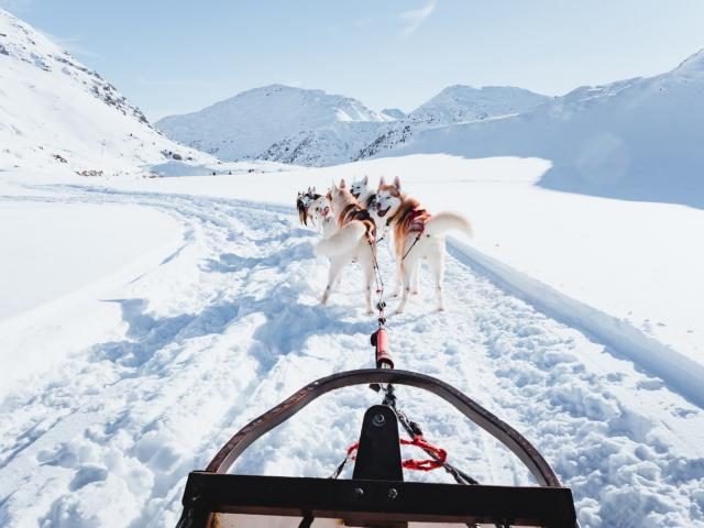 Chiens De Traineau Alpe D Huez Montagne Outdoor 29