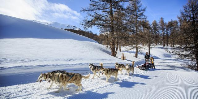 Balade en chiens de traîneaux à Vars en famille