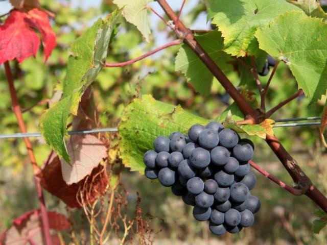 Vignobles Vendômois