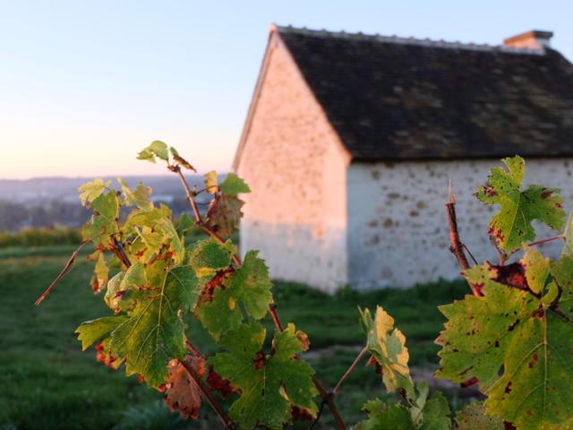 Vignoble de la pente des Coutis à Vendôme