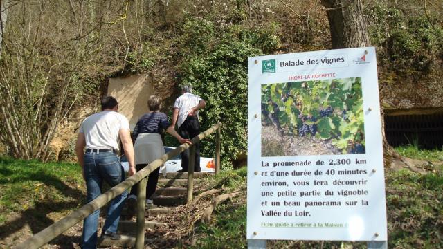 Balade dans les vignes à Thoré La Rochette