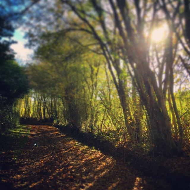 Les 3 chemins Maison Botanique de Boursay