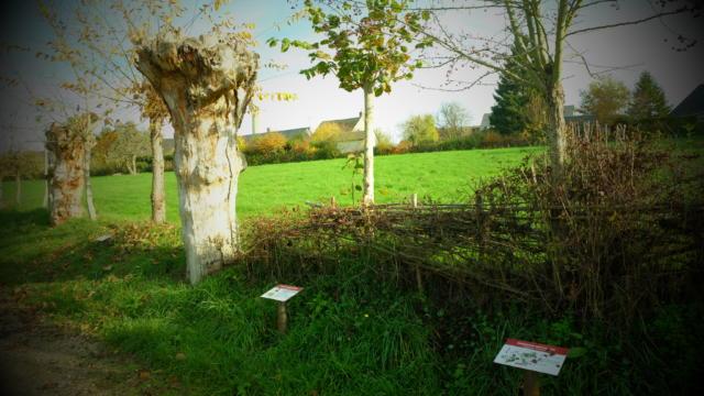 Chemin des Trognes à la Maison Botanique de Boursay